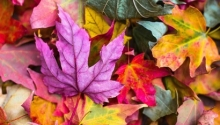 Awesome autumn wellness days